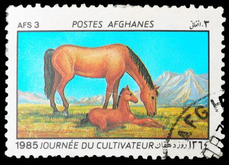 Afghanistan - CIRCA 1985: A Stamp printed in Afghanistan shows image of a Horses, circa 1985