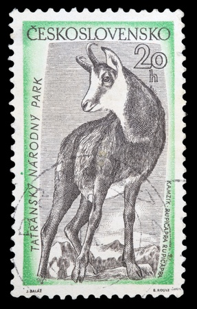 CZECHOSLOVAKIA - CIRCA 1957: A stamp printed in Czechoslovakia, shows Chamois, circa 1957 photo