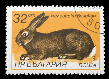 BULGARIA - CIRCA 1986: A stamp printed in Bulgaria, shows a rabbit, Hares and Rabbits series, circa 1986 photo