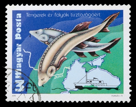 sturgeon: HUNGARY - CIRCA 1979: The stamp printed in Hungary shows a sturgeon, circa 1979 Stock Photo