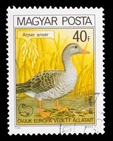 HUNGARY - CIRCA 1980: A post stamp printed in Hungary shows image Anser, circa 1980 photo