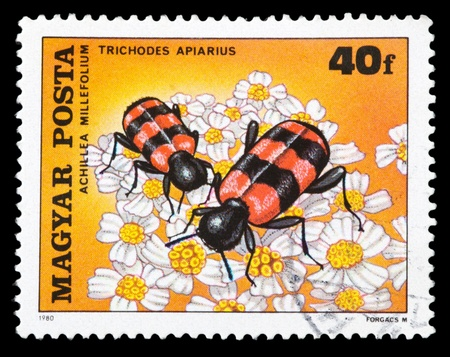 HUNGARY - CIRCA 1980: A stamp printed in Hungary shows Trichodes apiarius, series devoted to insects pollinate flowers, circa 1980 Stock Photo - 11803742