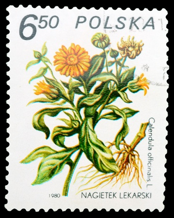 polska: POLAND - CIRCA 1980: A stamp printed in POLAND shows image of a Calendula officinalis, herb series, circa 1980 Stock Photo
