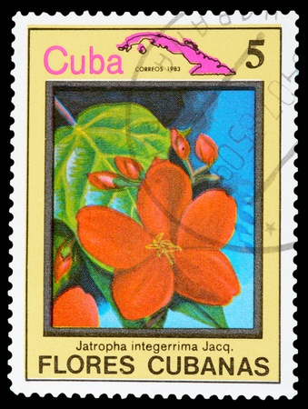 CUBA - CIRCA 1983: A stamp printed in Cuba shows a Jatropha integerrima, series Flores Cubanas, circa 1983 Stock Photo