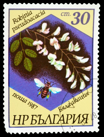 BULGARIA - CIRCA 1987: A stamp printed in BULGARIA shows a Robinia pseudoacacia, series, circa 1987 photo