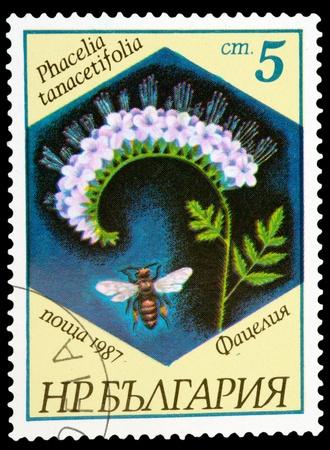 BULGARIA - CIRCA 1987: A stamp printed in BULGARIA shows a Phacelia tanacetifolia, series, circa 1987 photo