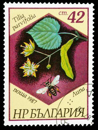 tilia: BULGARIA - CIRCA 1987: A stamp printed in Bulgaria shows Tilia parvifolia, circa 1987 Stock Photo