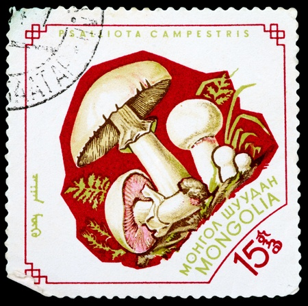 torminosus: MONGOLIA - CIRCA 1964: A Stamp printed in MONGOLIA shows image of the Psalliota Campestris, from the series Mushrooms, circa 1964 Stock Photo