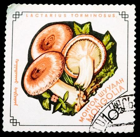 torminosus: MONGOLIA - CIRCA 1964: A Stamp printed in MONGOLIA shows image of the Lactarius torminosus, from the series Mushrooms, circa 1964