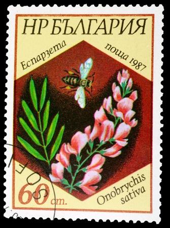 BULGARIA - CIRCA 1987: A stamp printed in BULGARIA shows a Onobrychis sativa, series, circa 1987 photo
