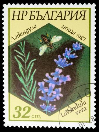 BULGARIA - CIRCA 1987: A stamp printed in BULGARIA shows a Lavandula vera, series, circa 1987 photo