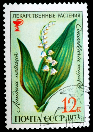 USSR - CIRCA 1973: A stamp printed in USSR shows a Convallaria majalis, herb series, circa 1973 photo