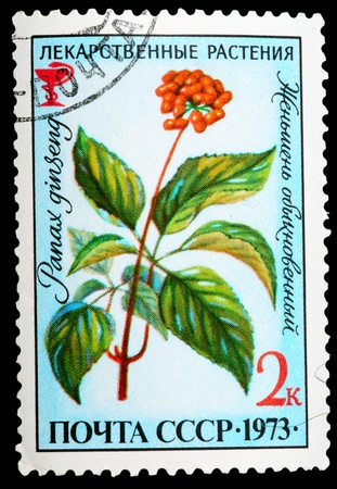 USSR - CIRCA 1973: A stamp printed in USSR shows a Panax ginseng, herb series, circa 1973 photo