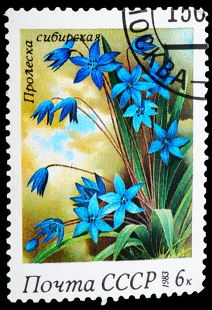 USSR - CIRCA 1983: stamp printed in USSR, shows Scilla sibirica, series Spring Flowers, circa 1983 photo