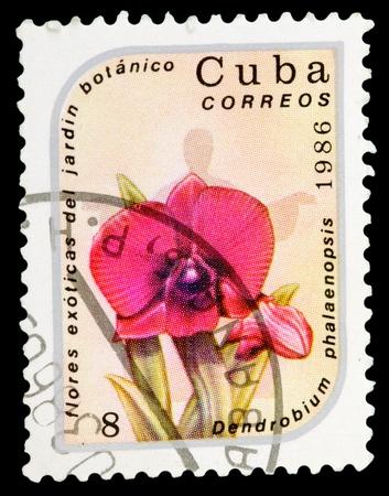CUBA - CIRCA 1986: A stamp printed in Cuba shows image of a Dendrobium phalaenopsis, circa 1986 photo