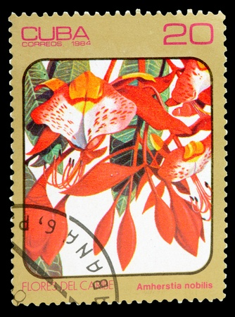 phytology: CUBA - CIRCA 1984: A Stamp printed in CUBA shows image of a Amherstia nobilis, from the series Caribbean Flowers, circa 1984