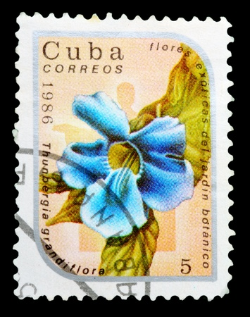 CUBA - CIRCA 1986: A Stamp printed in CUBA shows image of a Thunbergia grandiflora, from the series