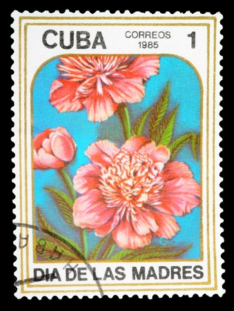 pion: CUBA - CIRCA 1985: A Stamp printed in CUBA shows image of a Peonies, from the series Mothers Day, circa 1985 Stock Photo
