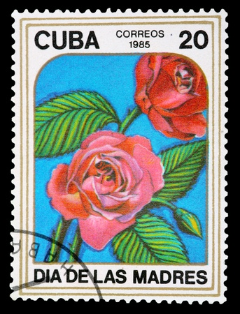 phytology: CUBA - CIRCA 1985: A Stamp printed in CUBA shows image of a Roses, from the series Mothers Day, circa 1985