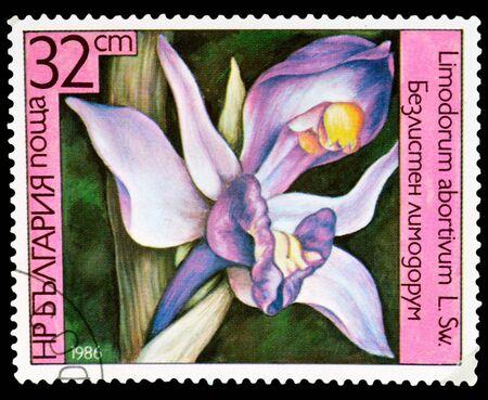 BULGARIA - CIRCA 1986: a stamp printed in Bulgaria shows flower and Limodorum abortivum, circa 1986 photo