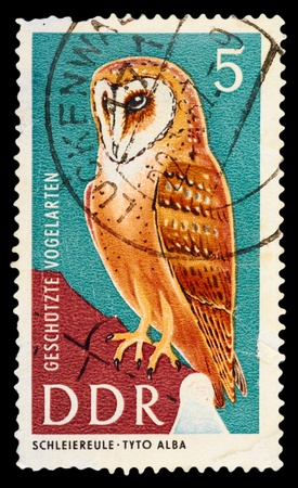 GDR - CIRCA 1967: A Stamp printed in GDR (East Germany) shows the image of a bird - Barn Owl with the inscription Tyto Alba from the series Protected birds, circa 1967 photo