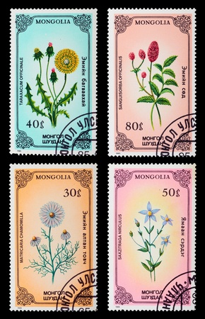 MONGOLIA - CIRCA 1985  A set of postage stamps printed in MONGOLIA shows flowers, circa 1985 Stock Photo - 17913523