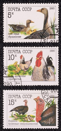 franked: USSR - CIRCA 1990: A set of postage stamp printed in the USSR, shows a birds, circa 1990 Editorial