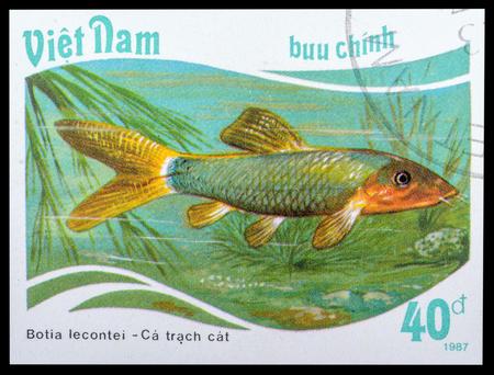 loach: VIETNAM - CIRCA 1987: a stamp printed in the Vietnam, shows Red-finned Loach - Botia lecontei, series Aquarium fish, circa 1987