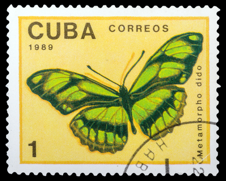 dido: CUBA- CIRCA 1989: a stamp printed in the Cuba, shows  butterfly Metamorpho dido, series Butterflies, circa 1989