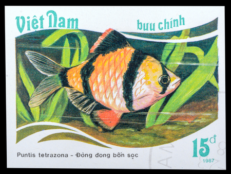 tetrazona: VIETNAM - CIRCA 1987: a stamp printed in the Vietnam, shows Tiger barb - Puntius tetrazona, series Aquarium fish, circa 1987 Editorial