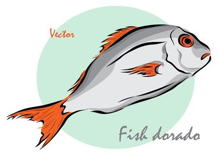dorado: Vector illustration. Illustration shows a fish doradoΠIllustration