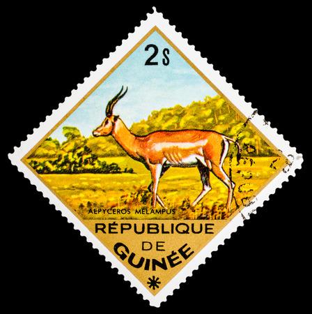guinee: REPUBLIQUE DE GUINEE - CIRCA 1976: A stamp printed in Republique de Guinee shows Aepyceros melampus, series animals, circa 1976