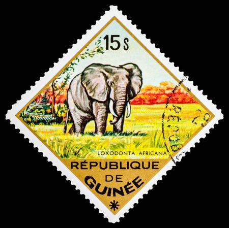 guinee: REPUBLIQUE DE GUINEE - CIRCA 1976: A stamp printed in Republique de Guinee shows Elephant, series animals, circa 1976