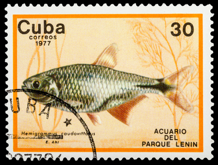 postmail: CUBA - CIRCA 1977: A stamp printed in Cuba shows aquarium fish, series, circa 1977