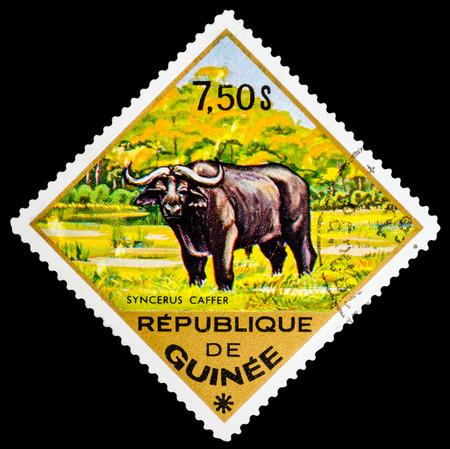 guinee: REPUBLIQUE DE GUINEE - CIRCA 1976: A stamp printed in Republique de Guinee shows Syncerus caffer, series animals, circa 1976 Editorial
