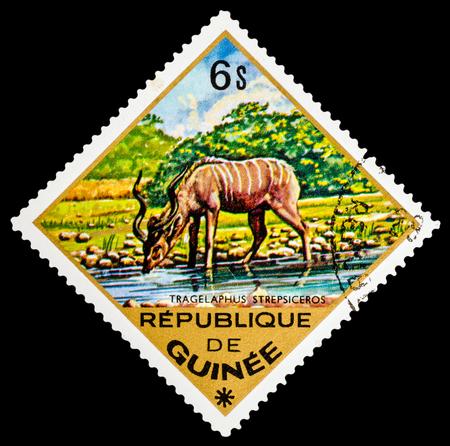 guinee: REPUBLIQUE DE GUINEE - CIRCA 1976: A stamp printed in Republique de Guinee shows Tragelaphus strepsiceros, series animals, circa 1976