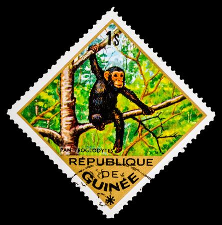 guinee: REPUBLIQUE DE GUINEE - CIRCA 1976: A stamp printed in Republique de Guinee shows  Pan troglodytes, series animals, circa 1976 Editorial
