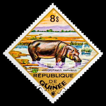 guinee: REPUBLIQUE DE GUINEE - CIRCA 1976: A stamp printed in Republique de Guinee shows Hippopotamus, series, circa 1976 Editorial