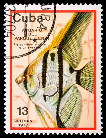 tetrazona: CUBA - CIRCA 1977: A stamp printed in Cuba shows aquarium fish, series, circa 1977