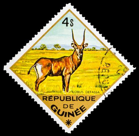 guinee: REPUBLIQUE DE GUINEE - CIRCA 1976: A stamp printed in Republique de Guinee shows Kobus defassa, series animals, circa 1976 Editorial