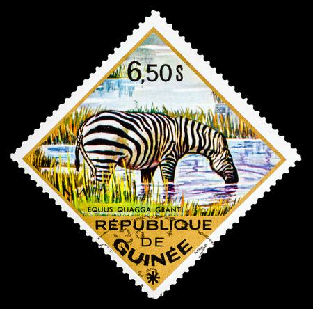 guinee: REPUBLIQUE DE GUINEE - CIRCA 1976: A stamp printed in Republique de Guinee shows Zebra, series animals, circa 1976