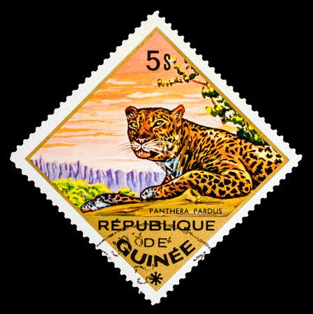 guinee: REPUBLIQUE DE GUINEE - CIRCA 1976: A stamp printed in Republique de Guinee shows Panthera pardus, Leopard, series animals, circa 1976
