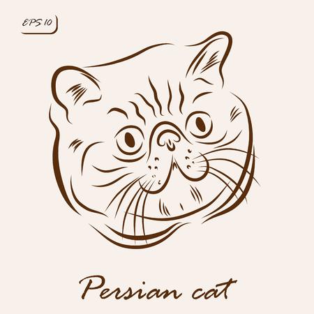 Vector illustration. Illustration shows a cat breed Persian cat