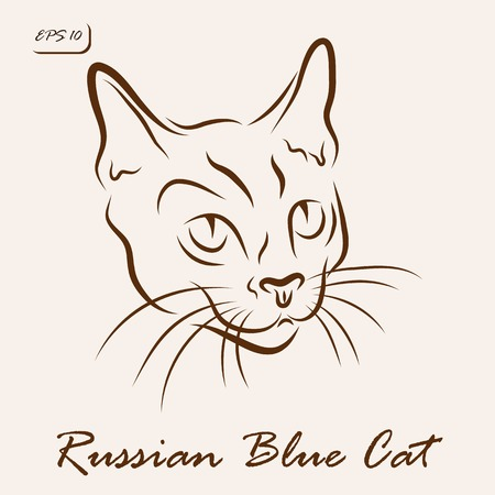 Vector illustration. Illustration shows a cat breed Russian Blue Cat