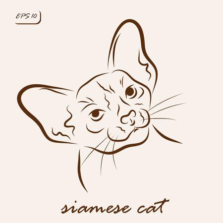 Vector illustration. Illustration shows a cat breed Siamese cat