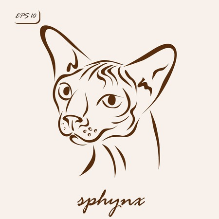Vector illustration. Illustration shows a cat breed sphinx