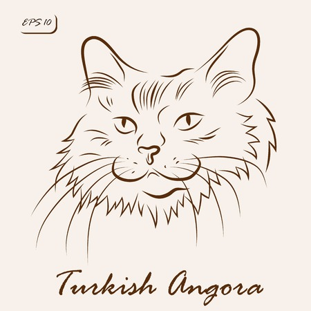 Vector illustration. Illustration shows a cat breed Turkish Angora
