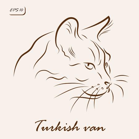 Vector illustration. Illustration shows a cat breed Turkish van