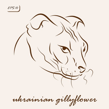 Vector illustration. Illustration shows a cat breed Ukrainian gillyflower