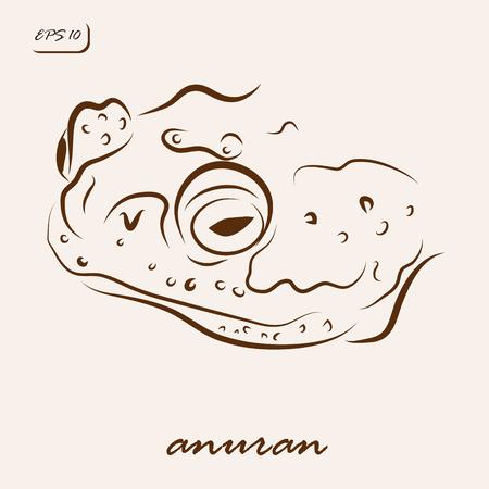 Vector illustration. Illustration shows a anuran frog Illustration